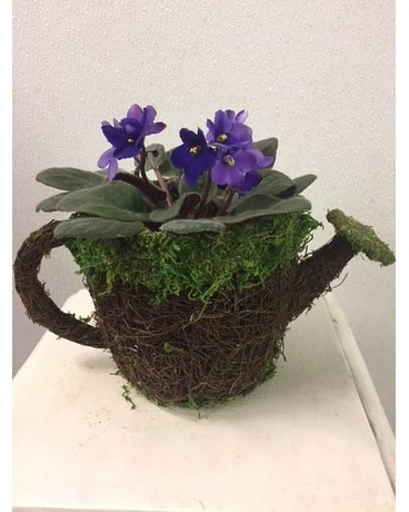 Moss Pot with Violet Plant