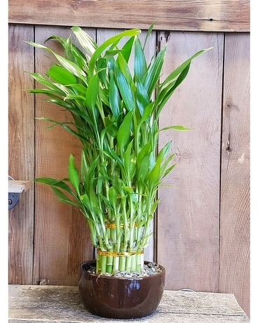 Lucky Bamboo Flower Arrangement
