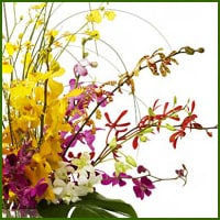 Florist Fairfax VA - Delivered by MyFlorist in Fairfax, VA. The unusual, unique, and distinctive qualities of our tropical and exotic flower designs regularly make an extraordinary impression in those who see and receive them.