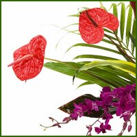 The unusual, unique, and distinctive qualities of our tropical and exotic flower designs regularly make an extraordinary impression in those who see and receive them.  Delivered in Potomac by local florist - MyFlorist.