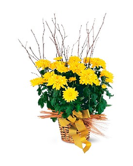 Yellow Hope Chrysanthemum Flower Arrangement