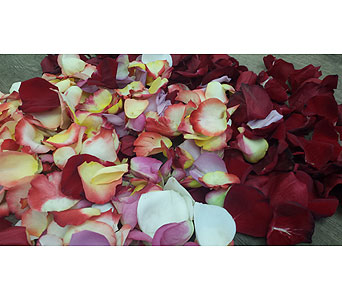 Rose Petals Mixed Colors