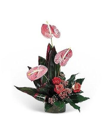 Hot pink anthuriums in west hazleton pa smith floral co hot pink anthuriums flower arrangement mightylinksfo