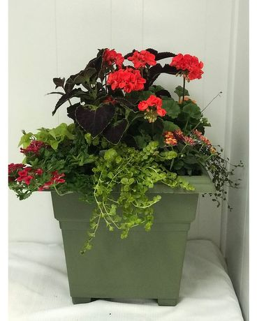 Extra Large Patio Planter Plant