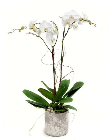 Double White Orchid Flower Arrangement
