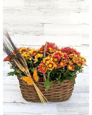 Countryside Basket Plant