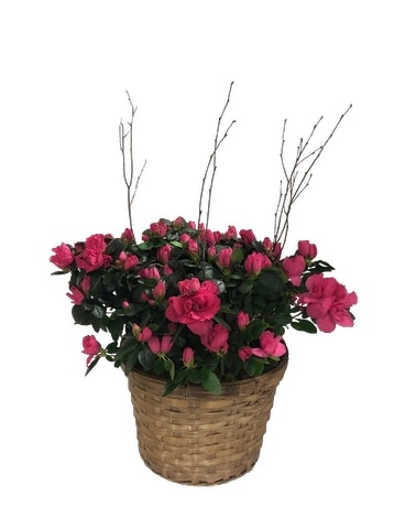 Southern Azalea Flower Arrangement
