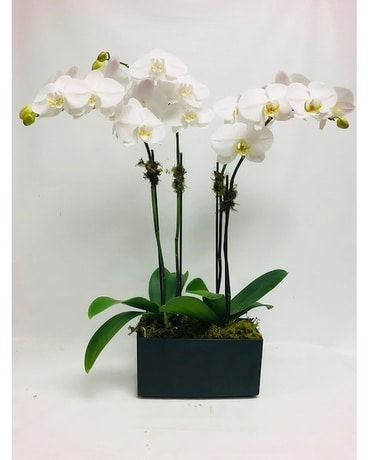 Grand Orchids Flower Arrangement