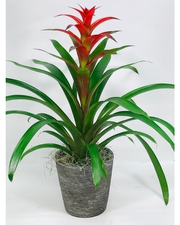 Bromeliad Beauty Flower Arrangement