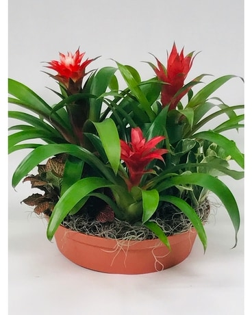 Bromeliad Gardens Flower Arrangement