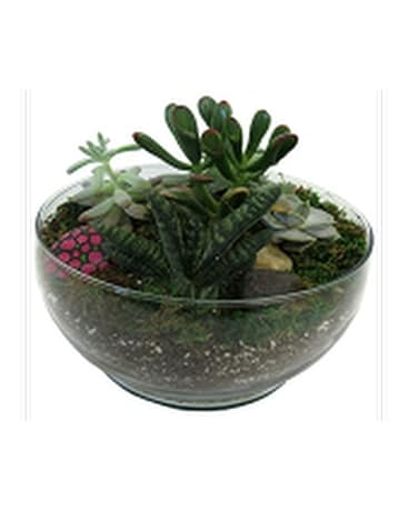 Stylish Succulents Flower Arrangement