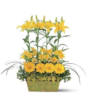 Yellow Garden Rows Flower Arrangement
