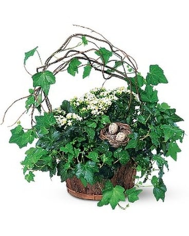 Kalanchoe and Ivy Basket Flower Arrangement