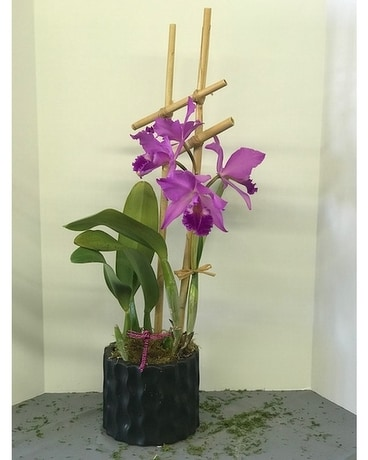 Cattleya Orchid Flower Arrangement