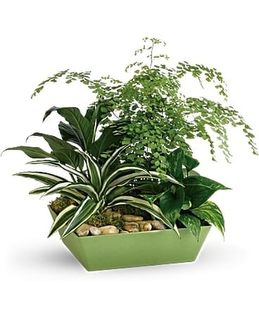 Forever Green Plant Garden Flower Arrangement