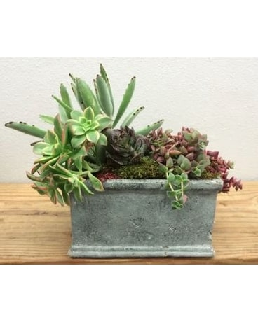 Overflowing Succulents Flower Arrangement