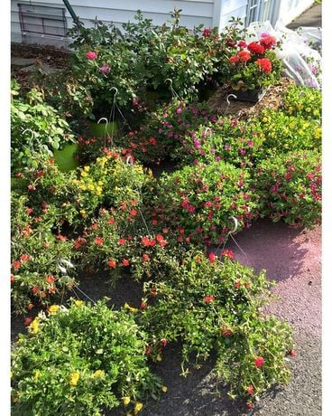 Various Hanging Blooming Baskets Plant