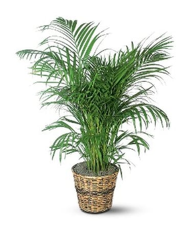 Areca Palm Flower Arrangement