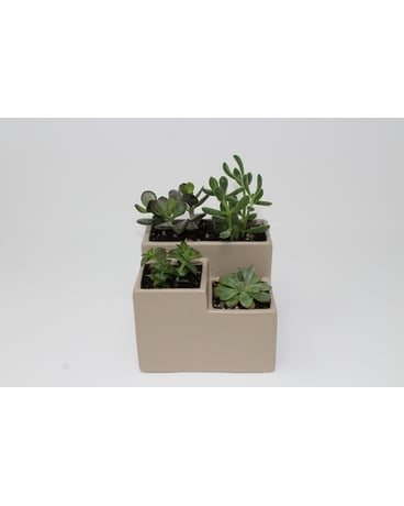 Three Tier Succulent Planter Plant