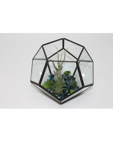 AIR FERN TERRARIUM Plant