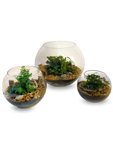 Thoughtful Terrariums