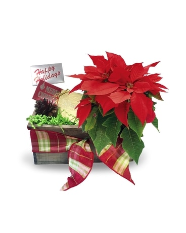 Holiday Gift Basket Gift Basket