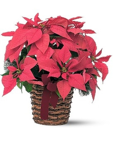 Poinsettia Basket Flower Arrangement