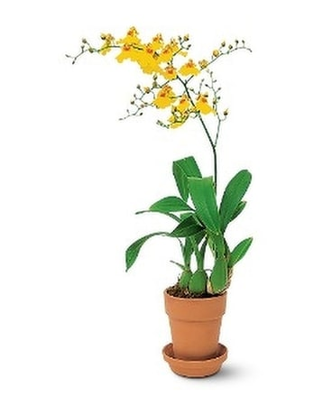 Yellow Oncidium Orchid Flower Arrangement