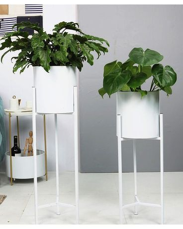 Household Plants with a Stand Plant