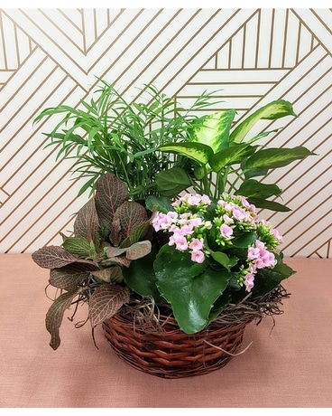 Basket of Laughs Plant