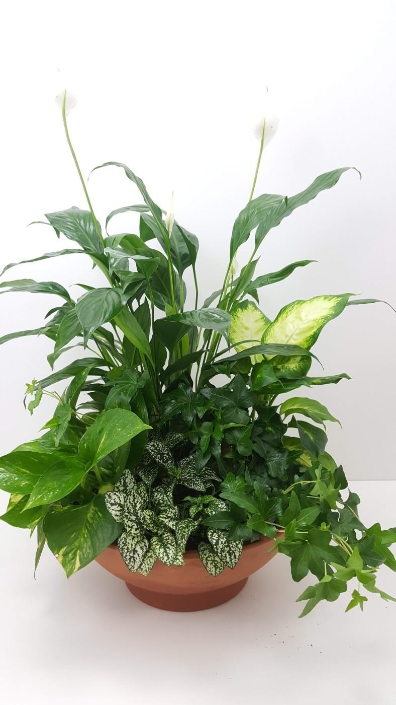 Plants Delivery Northfield Mn Forget Me Not Florist