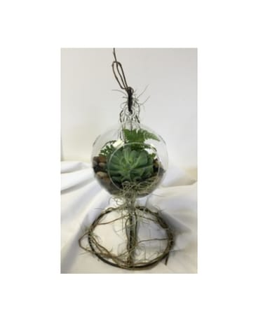 Small Hanging Terrarium Sfdterrsmh In Crafton Pa Sisters Floral