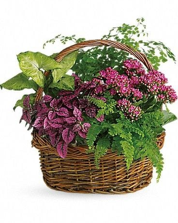 Secret garden Basket Dish Garden Plant