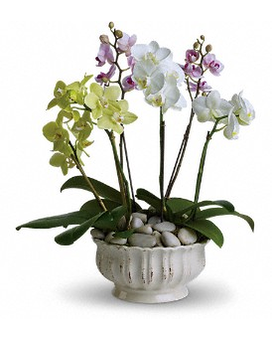 Regal Orchids Flower Arrangement