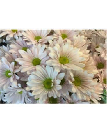 Country Daisy Bouquet