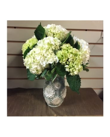 White And Green Hydrangea In Mount Kisco Ny Hollywood Flower Shop
