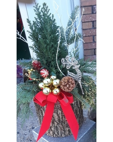 live spruce tree in log Flower Arrangement