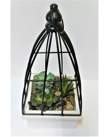 SUCCULENT GARDEN WITH CAGE Custom product