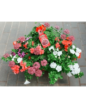 Hanging Baskets Custom product
