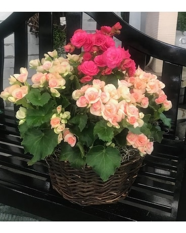 Reiger Begonia Custom Basket Basket Arrangement