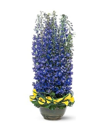 Distinguished Delphinium Flower Arrangement