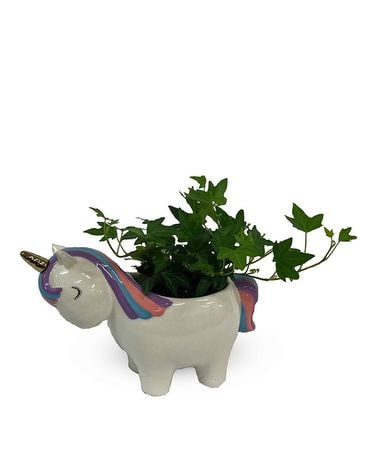 Unicorn Daydreams Plant