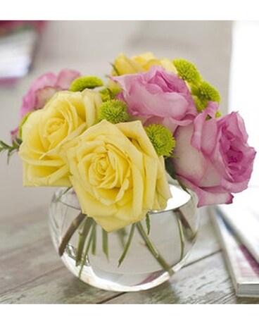 Telefloras pink lemonade roses by ollies flowe in shawano wi telefloras pink lemonade roses by ollies flowe flower arrangement mightylinksfo