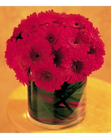 Red Gerbera Collection - by Ollie's Flowers Inc. Flower Arrangement