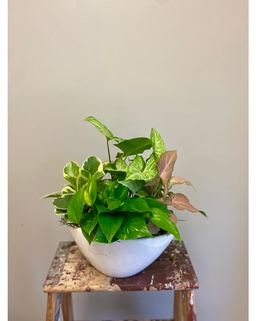 Tall Boat Planter Plant