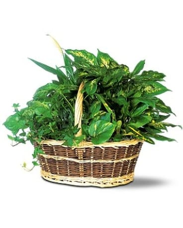 Green Garden Basket Deluxe Flower Arrangement