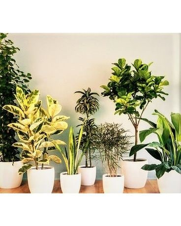 Designer Select Green Plant
