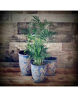 *SPECIAL* Easy Care Plant in Blue Boho Floral Pot Plant