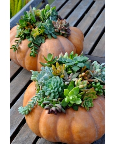 Cinderella Pumpkin Garden Flower Arrangement