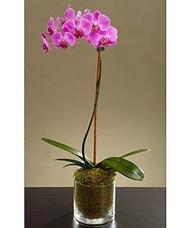 Potted Purple Orchid Flower Arrangement